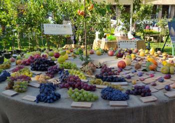 I Frutti del Castello