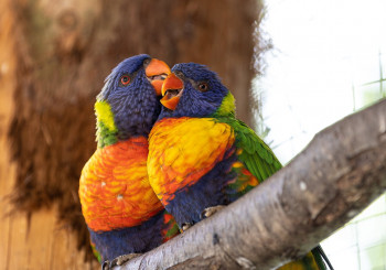 Campionato Mondiale Ornitologia