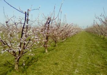 Campo dei frutti