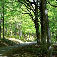 Bobbio - Chiavari, nella foresta del Monte Penna, in discesa dal Passo del Chiodo